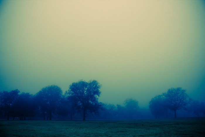 7) Another mysterious, yet beautiful shot of trees outlined in the eerie fog in Central Texas.