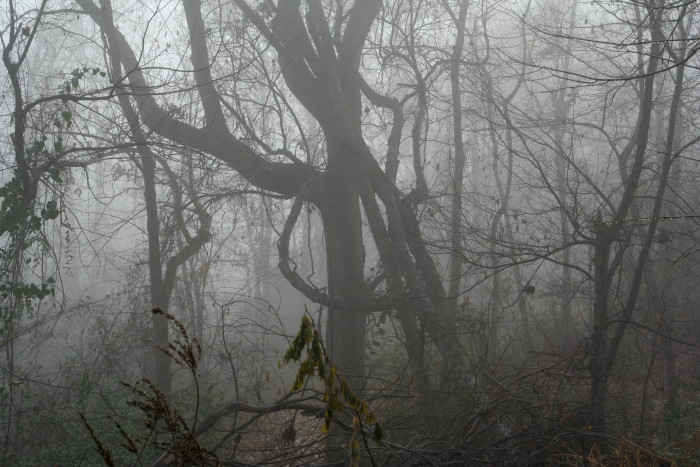 16. It's hard to believe this spooky picture was taken near the campus of Mississippi State University.