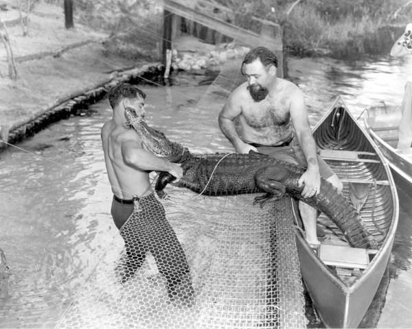 4. Captured Alligator