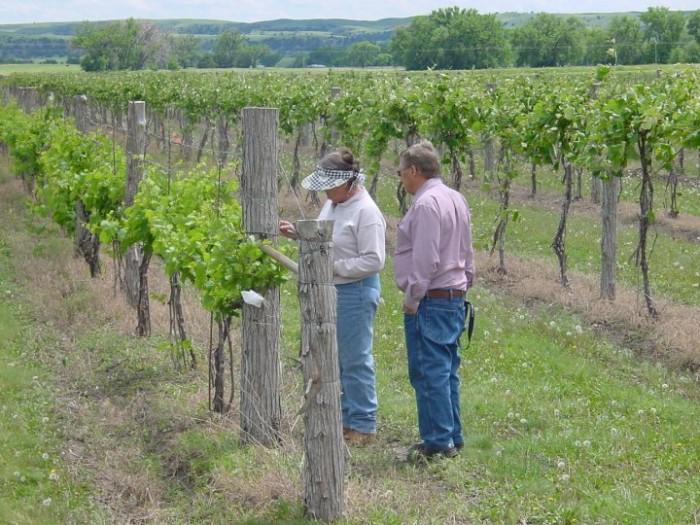 17 Ranch Winery, Lewellen