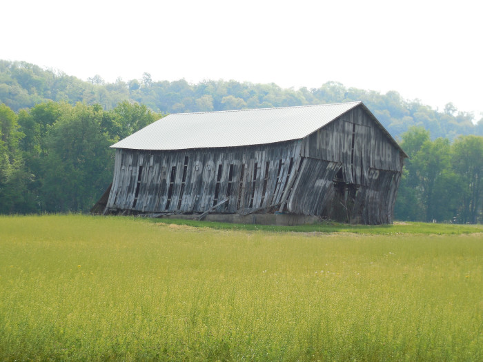11. This is a mail pouch barn in Jefferson-Switzerland County that looks like it is going to fall over!