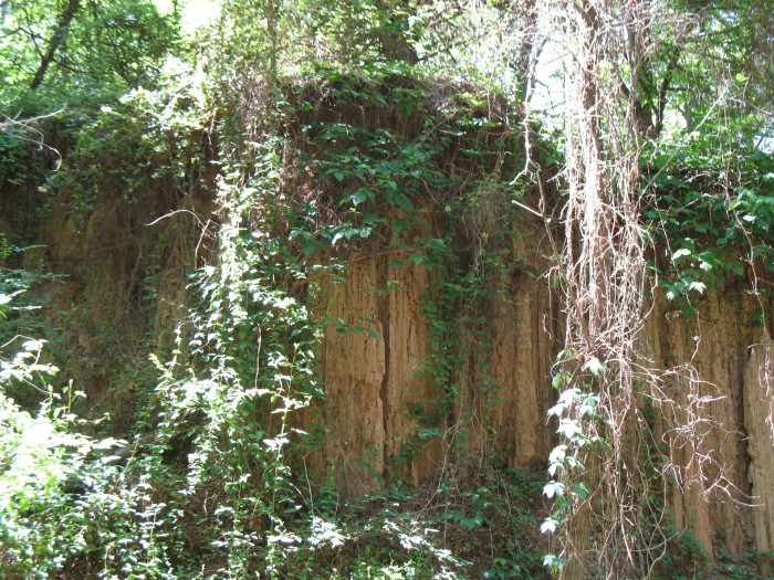 2. Mississippi Petrified Forest, Flora