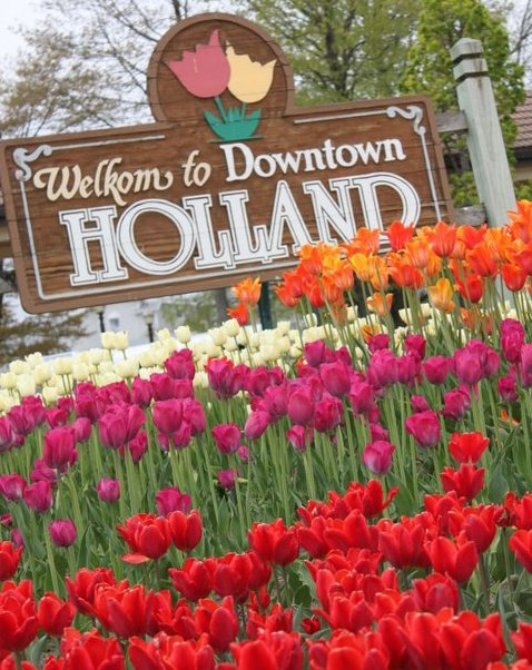 8) Tulips in Holland