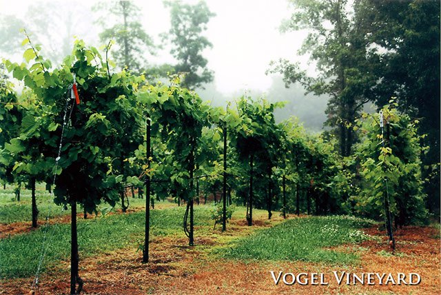 4.) Vogel Family Vineyards (Galena)