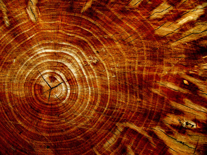 2. Dendrochronology