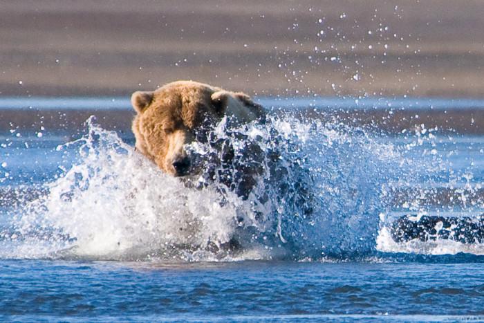 2) Bear Charge