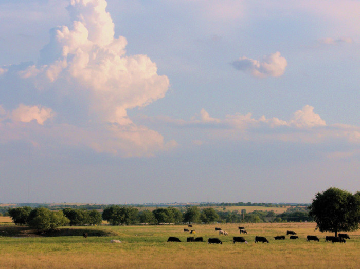 5) The neverending land at a gorgeous farm in Central Texas.