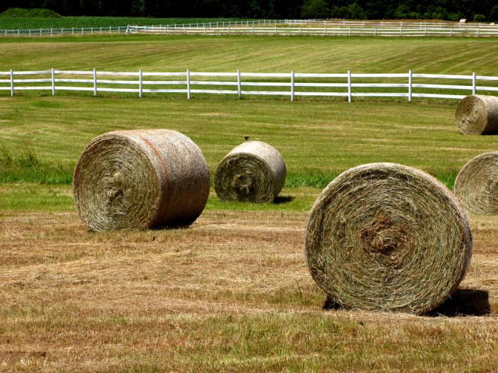 7. Gilbert was a hay capital.