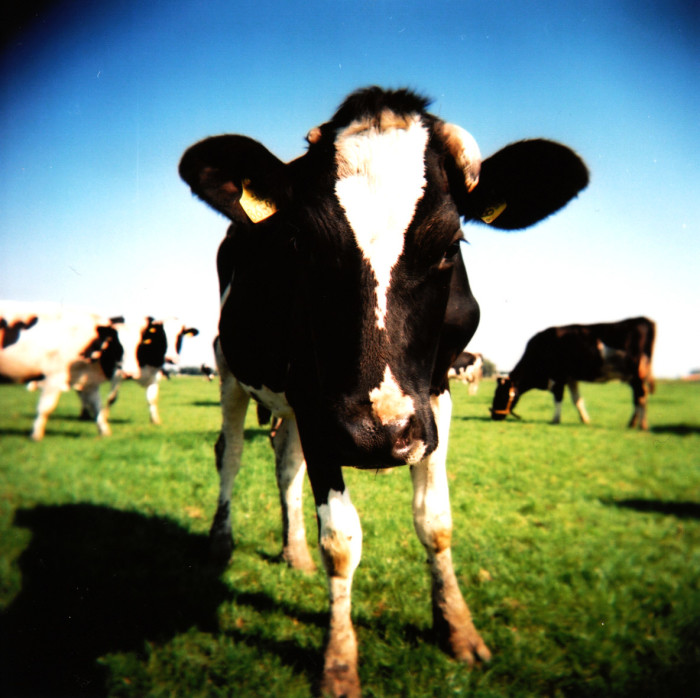 2) It is illegal to milk another person's cow.