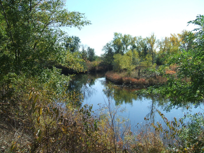 A Serene Pond at Sandy Channel State Wildlife Management Area