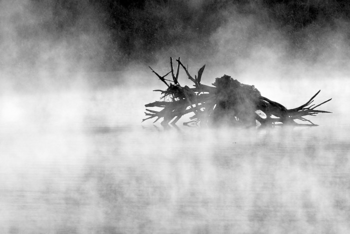 4) A creepy shot of a tree trunk along the Trinity River in West Fort Worth.