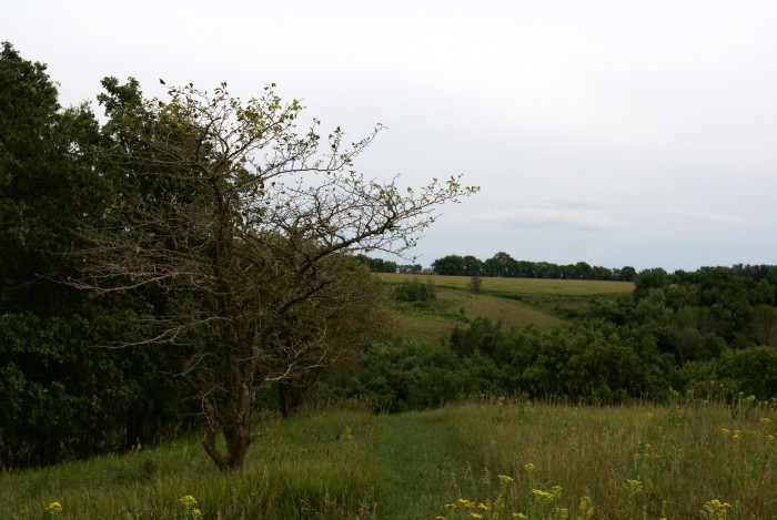 4. Kilen Woods State Park offers unmatched and historic prairie views.