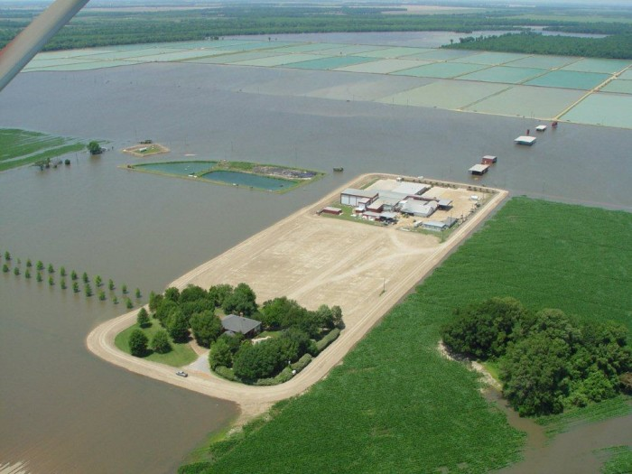 3. Ever wondered where your catfish come from? Well, here you go. This Mississippi Delta catfish farm is a good start.