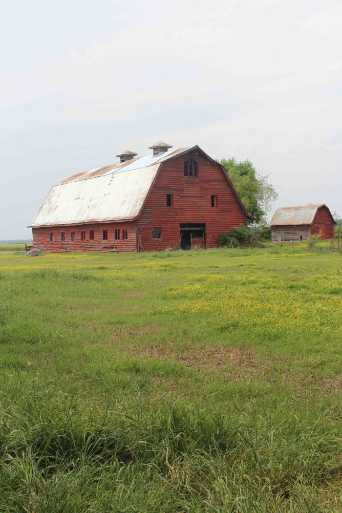 11 Farms in Mississippi That Will Make You Love The Country