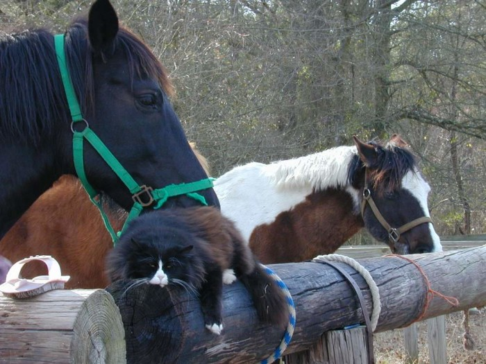12. At Blackberry Hill Farm, Thomas the cat likes hanging out with the horses. What charming photographs!