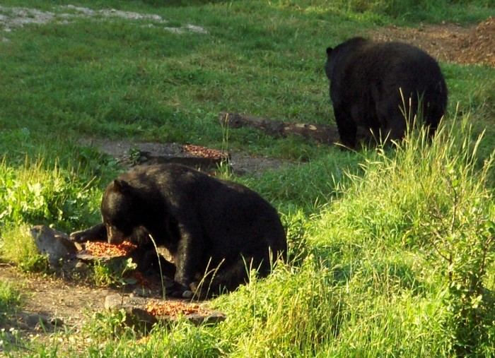 12. The Vince Shute Wildlife Sanctuary means a day of adorable bears and amazing scenery.