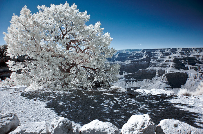 9. Infrared photography makes the Grand Canyon appear otherworldly.