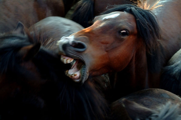 ...as you might scare horses.