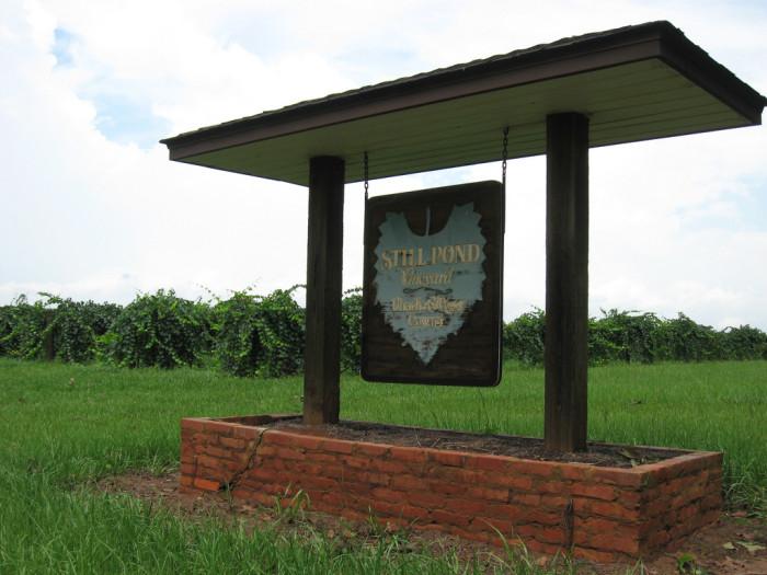 5) Still Pond Winery - Arlington, GA