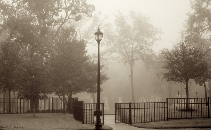 8) A dreary day at the park in Texas resembles a beautiful painting.