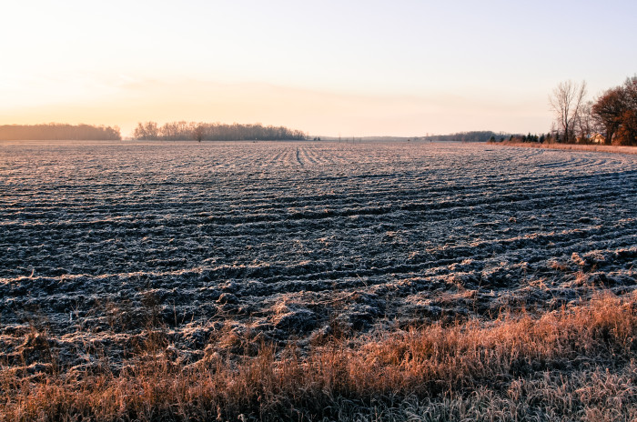 7. A frosty field near St. Cloud shows that even Minnesota winter can't fade the beauty of the Minnesota Countryside.