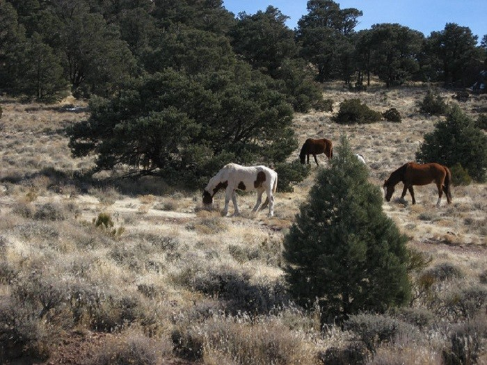 7. You've seen a herd of GORGEOUS wild mustangs on the side of the road.