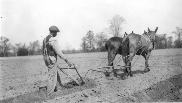 4. Plowing with mules in the Mississippi Delta.