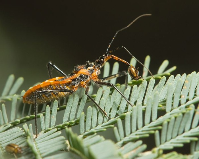 4. Assassin Bug