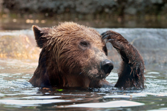 3) Did you see bears a lot?