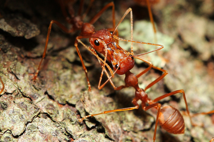4) Red Ants (and snakes, scorpions, and anything else that bites!)