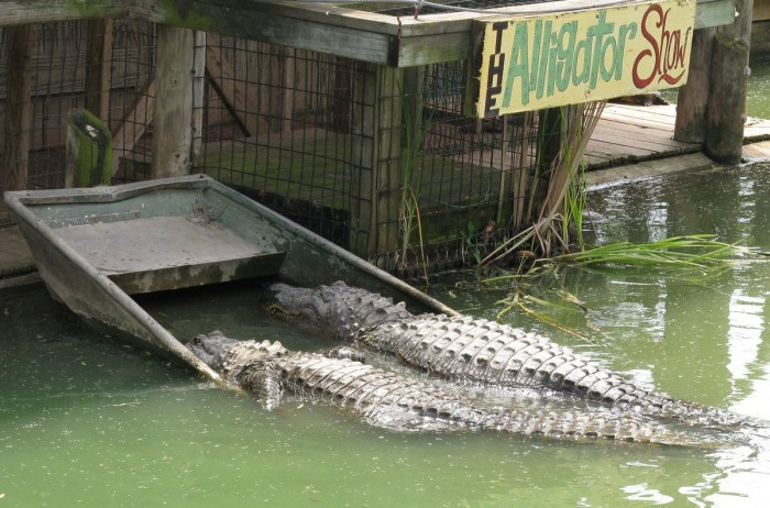 Continue south and stop by the Natchitoches Alligator Park—where you can get reaaaally up close and personal with gators!