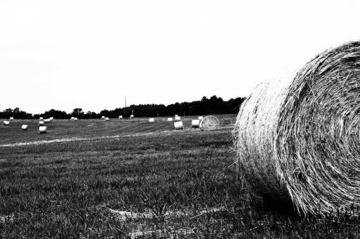 4. Fresh cut hay can fill the air with a sweet smell. I used to play on these when I was young.
