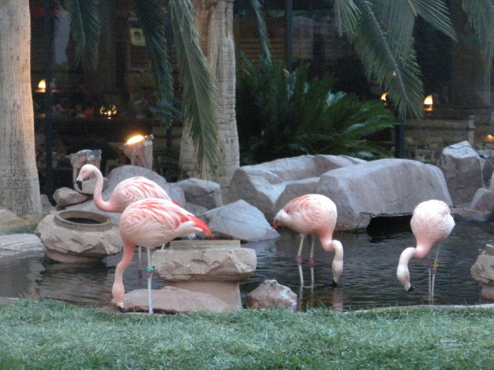 3. Wildlife Habitat at the Flamingo Hotel & Casino - Las Vegas, NV