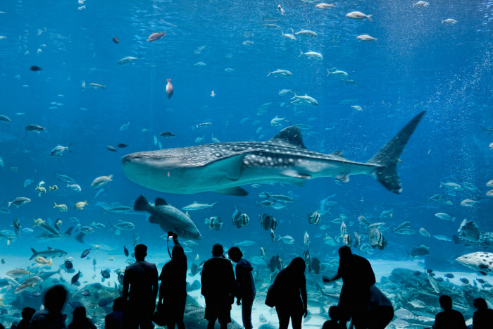 8) Go to the largest aquarium in the world.