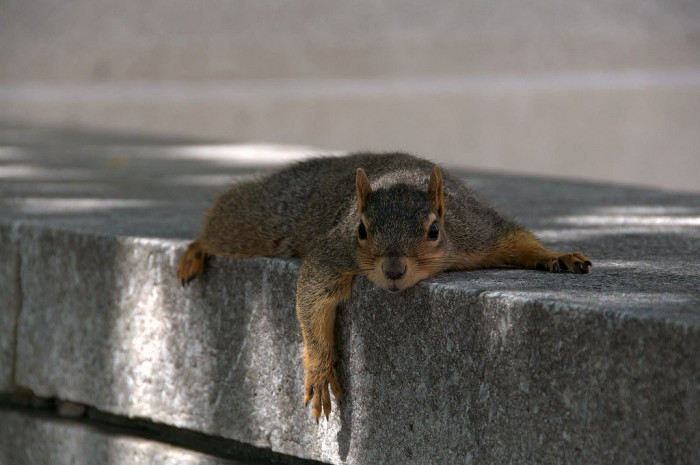 This Poor Squirrel Gorged on Fries and Can't Move Now, Even to Run From a Guy With a Camera
