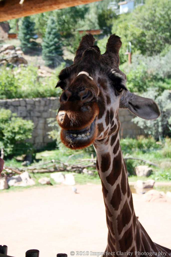 9.) The Cheyenne Mountain Zoo is well known for its photogenic animals.