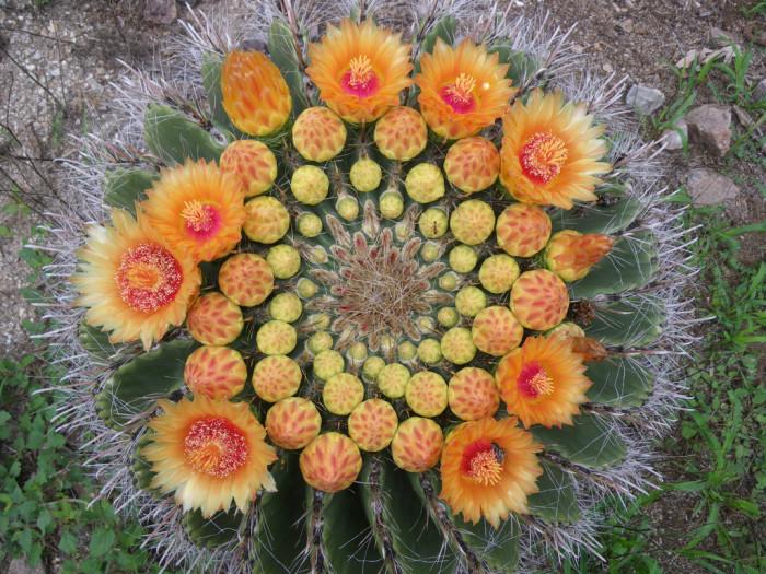 5. Cactus, cactus everywhere!