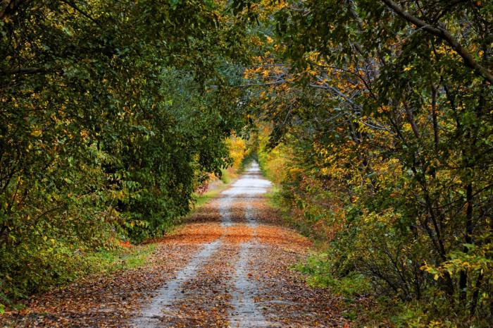 An Inviting Path on the MoPac Trail