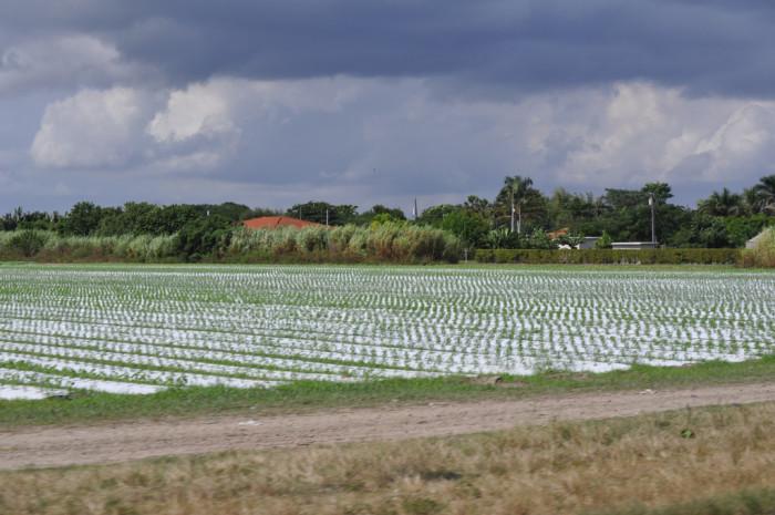 11. Silver Palm, Florida (Redland)
