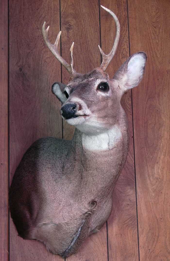 5. And if there's a gun rack, there's often times a mounted deer close by.