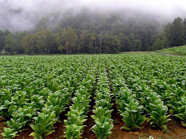 10 Beautiful Farms In North Carolina