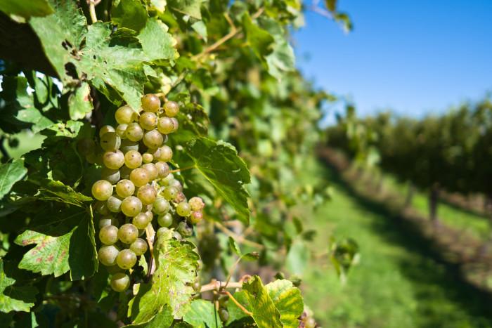 5. Tabor Home Vineyards & Winery, Baldwin