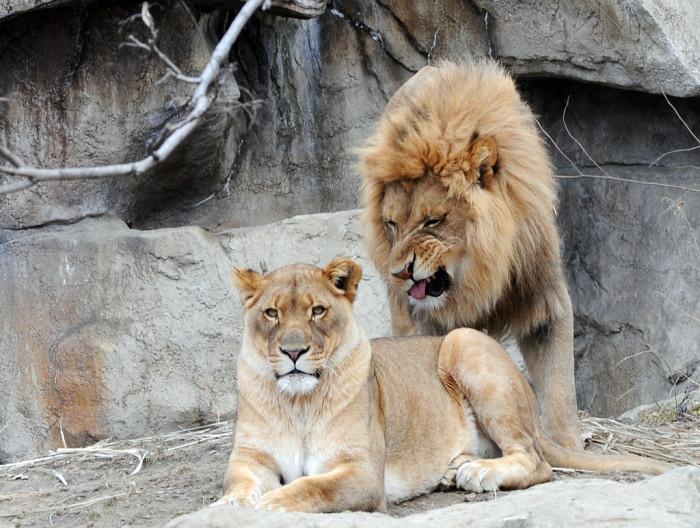 6.  Disharmony at the St. Louis Zoo