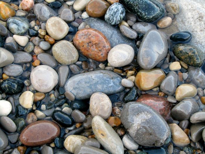5) Hunt for Petoskeys, MIchigan's state stone