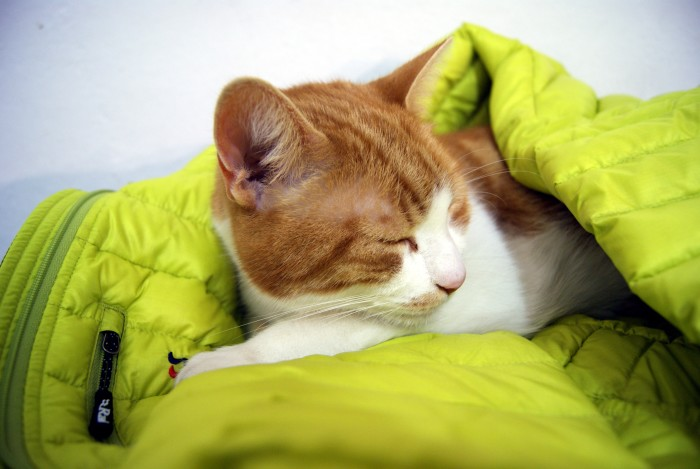 7. A down jacket. Preferably with cat. Does that not make your heart melt?