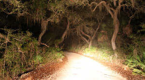 18 Eerie Shots In Florida That Are Spine-Tingling Yet Magical