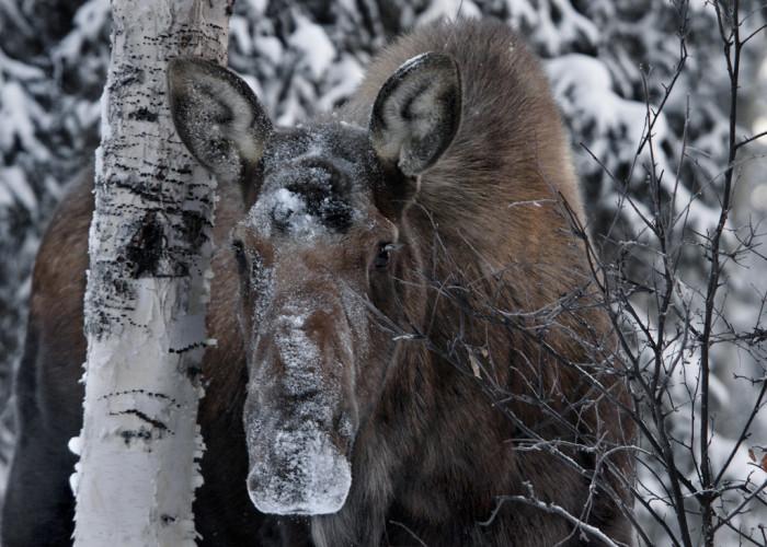 6) Denali National Park & Preserve