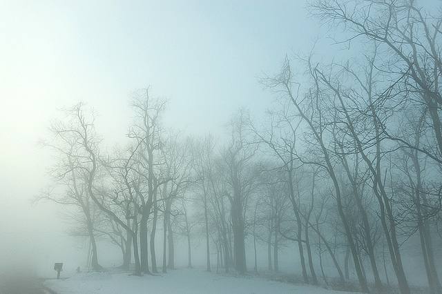 1. These trees in Harrisburg disappear into the mist.