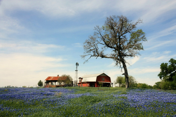 7) Farms and ranches, because Texans appreciate living off the land and being as self-sufficient as possible.