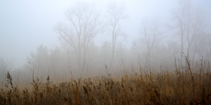 6. A thick mist blurs the mysterious forest behind this field.